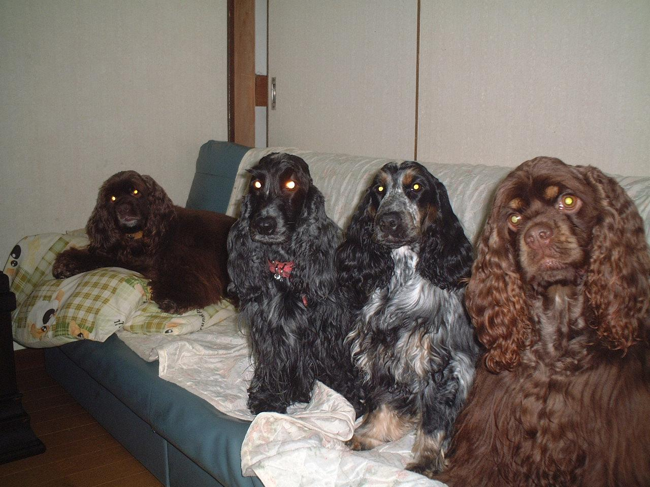 WE LOVE COCKERSPANIELS!英米交流掲示板